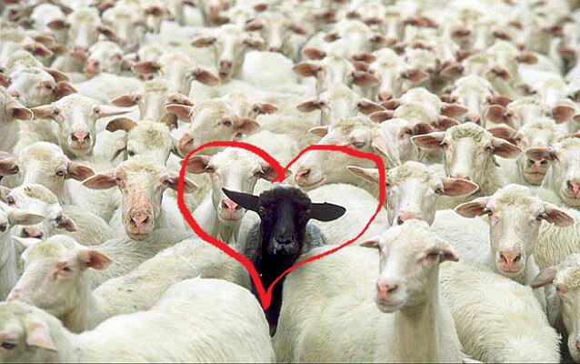 Zwarte schapen en zelfliefde,  7 tips om met jezelf door één deur te kunnen.