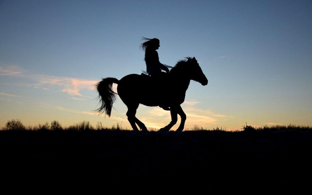 Controle, loslaten en verbinden anders bekeken. Het paard en de ruiter in ieder mens.